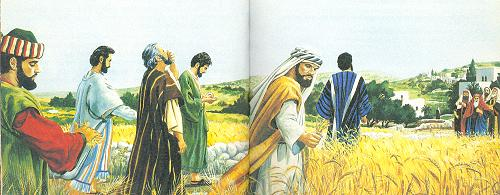 Corn-picking on the Sabbath