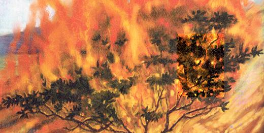 For the Children of the Jehovah's Witnesses: Burning Thorn Bush